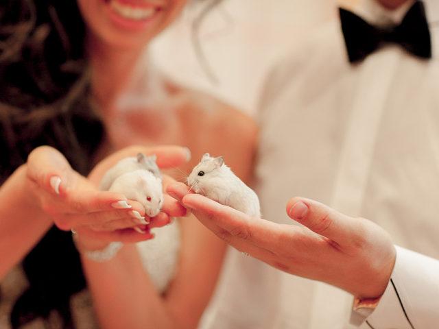 Фотосессия на свадьбе в стиле Золушка
